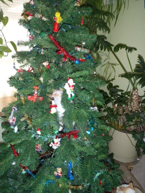 I'm an ornament!